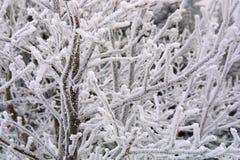 Paisaje del hielo - la Navidad foto de archivo libre de regalías
