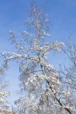 Árbol en nieve en el cielo azul Foto de archivo libre de regalías
