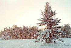Paisaje del invierno - árbol de abeto cubierto con nieve en el bosque del invierno debajo de nieve que cae en tiempo frío Fotos de archivo