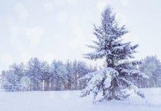 Paisaje del invierno - árbol de abeto nevoso en el bosque del invierno debajo de la nieve que cae por la tarde fría del invierno Imagenes de archivo