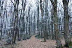 Paisaje del invierno Árboles en la estación de Forest Cold de la escarcha Fotografía de archivo libre de regalías