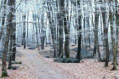 Paisaje del invierno Árboles en la estación de Forest Cold de la escarcha Imagen de archivo libre de regalías