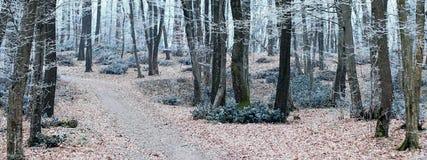 Paisaje del invierno Árboles en la estación de Forest Cold de la escarcha Fotos de archivo libres de regalías