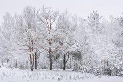 Paisaje del invierno Árboles Nevado nevadas Tiempo de la Navidad Nieve blanca en árboles escarchados Fondo de la naturaleza de Na fotos de archivo libres de regalías