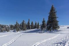 Paisaje del invierno del área de Platoto de la meseta en la montaña de Vitosha, Sofia City Region, Bulgaria fotos de archivo libres de regalías