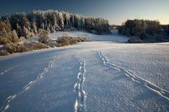 Paisaje del invierno Fotografía de archivo