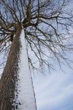 Paisaje del invierno - 03 Imágenes de archivo libres de regalías