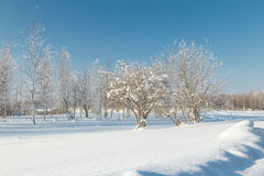 Paisaje del invierno. Foto de archivo libre de regalías