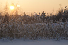 Paisaje del invierno. Imágenes de archivo libres de regalías