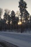Paisaje del invierno. Imagenes de archivo