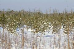 Paisaje del invierno. Fotos de archivo