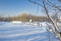 Paisaje del invierno. Fotografía de archivo libre de regalías