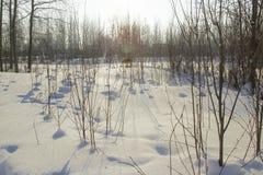 Paisaje del invierno. Imagen de archivo