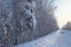Paisaje del invierno. Fotografía de archivo
