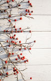 Paisaje del invierno Bayas rojas del espino en un fondo blanco Fotografía de archivo