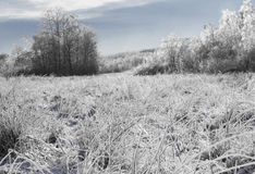 Paisaje del invierno, blanco y escarchado - prado y bosque Fotografía de archivo