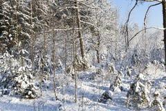 Paisaje del invierno del bosque Foto de archivo