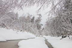 Paisaje del invierno Bosque congelado Fotografía de archivo libre de regalías