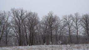 Paisaje del invierno Bosque cubierto con nieve almacen de metraje de vídeo