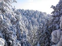 Paisaje del invierno, bosque del árbol cubierto por Snow Fotografía de archivo libre de regalías