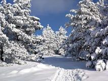 Paisaje del invierno, bosque del árbol cubierto por Snow Foto de archivo