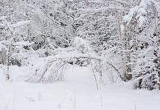 Paisaje del invierno Bosque hermoso del invierno en nieve Mañana escarchada temprana en el bosque Fotos de archivo