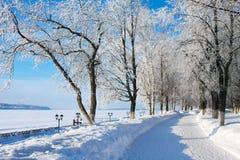 Paisaje del invierno, callejón Fotos de archivo libres de regalías