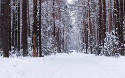 Paisaje del invierno Camino del invierno fotos de archivo