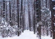 Paisaje del invierno Camino del invierno imagenes de archivo