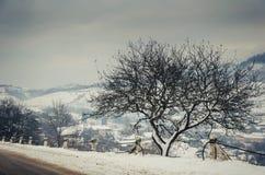 Paisaje del invierno, camino nevado en las montañas con los árboles Imagen de archivo