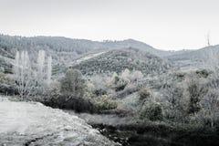 Paisaje del invierno con colores silenciados Imagen de archivo libre de regalías