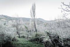 Paisaje del invierno con colores silenciados Fotos de archivo