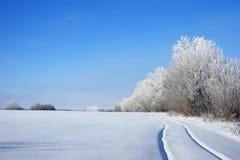 Paisaje del invierno con el árbol cubierto con escarcha Imagen de archivo