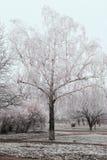 paisaje del invierno con el árbol cubierto con helada Imagen de archivo libre de regalías