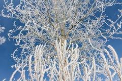 Paisaje del invierno con el árbol cubierto con escarcha y el cielo azul fotos de archivo