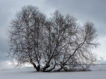 Paisaje del invierno con el árbol de abedul Imagenes de archivo