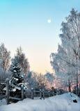 Paisaje del invierno con el árbol de abedul Foto de archivo libre de regalías