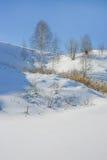 paisaje del invierno con el árbol de abedul en la colina Fotografía de archivo libre de regalías