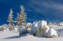 Paisaje del invierno con el árbol de abeto. Foto de archivo libre de regalías