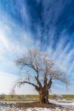 Paisaje del invierno con el árbol de la cubierta de la helada Imagen de archivo
