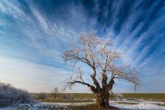 Paisaje del invierno con el árbol de la cubierta de la helada Imagenes de archivo