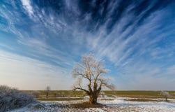 Paisaje del invierno con el árbol de la cubierta de la helada Foto de archivo