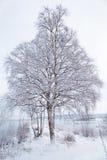 Paisaje del invierno con el árbol nevoso Imagenes de archivo
