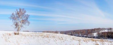 Paisaje del invierno con el árbol solo Fotos de archivo libres de regalías