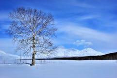 Paisaje del invierno con el árbol y el volcán Imágenes de archivo libres de regalías