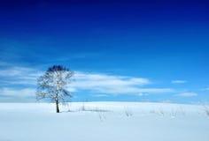 Paisaje del invierno con el árbol y el volcán Imagen de archivo