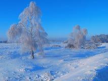 Paisaje del invierno con el abedul Fotografía de archivo libre de regalías