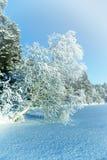 Paisaje del invierno con el abedul en el lago Fotos de archivo