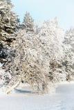 Paisaje del invierno con el abedul en el lago Imagenes de archivo