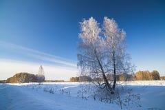 Paisaje del invierno con el abedul nevado Fotografía de archivo libre de regalías